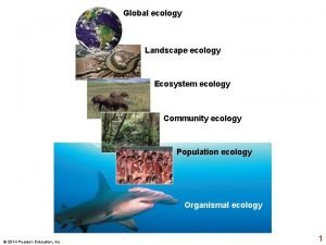 Global ecology Landscape ecology Ecosystem ecology Community ecology