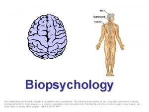 Biopsychology This multimedia product and its contents are