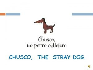 CHUSCO THE STRAY DOG Chusco was a very