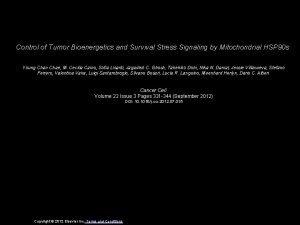 Control of Tumor Bioenergetics and Survival Stress Signaling