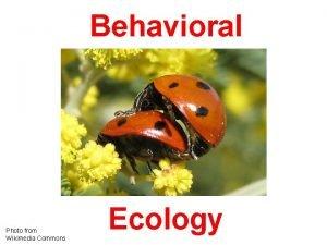 Behavioral Photo from Wikimedia Commons Ecology Ethological Underpinnings