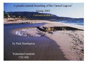 A psuedonatural breaching of the Carmel Lagoon Spring
