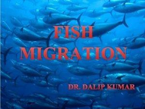FISH MIGRATION DR DALIP KUMAR Basic Terms Migration