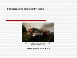 Sclar Large Animal Emergency Evacuation BLM providing animal