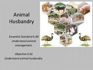 Animal Husbandry Essential Standard 6 00 Understand animal