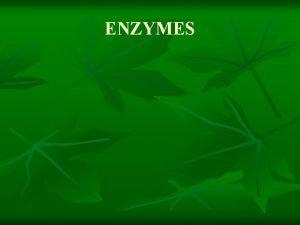 ENZYMES ENZYME STRUCTURE ENZYME n n n Enzymes