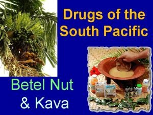 Drugs of the South Pacific Betel Nut Kava