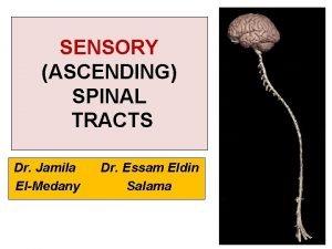 SENSORY ASCENDING SPINAL TRACTS Dr Jamila ElMedany Dr