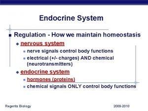 Endocrine System Regulation How we maintain homeostasis u