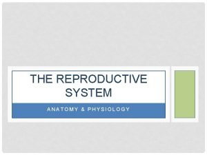 THE REPRODUCTIVE SYSTEM ANATOMY PHYSIOLOGY THE REPRODUCTIVE SYSTEM