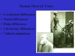 Human Derived Traits Locomotion differences Dental differences Brain