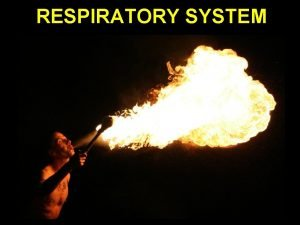 RESPIRATORY SYSTEM Respiration Facts Your lungs contain almost