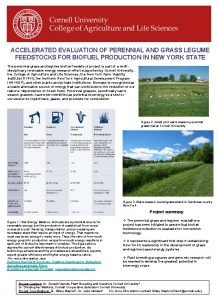 ACCELERATED EVALUATION OF PERENNIAL AND GRASS LEGUME FEEDSTOCKS