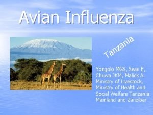 Avian Influenza a i n a z n