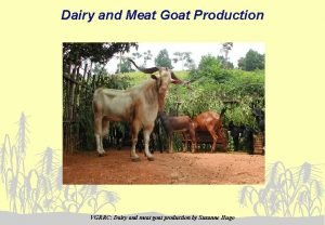 Dairy and Meat Goat Production VGRRC Dairy and