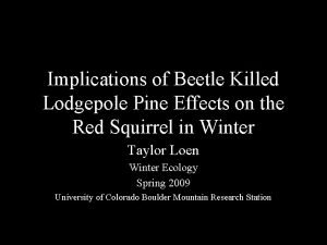 Implications of Beetle Killed Lodgepole Pine Effects on