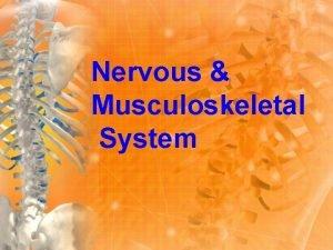 Nervous Musculoskeletal System Skeleton The human skeleton has