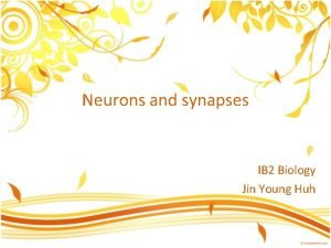 Neurons and synapses IB 2 Biology Jin Young