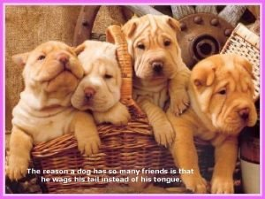 The reason a dog has so many friends