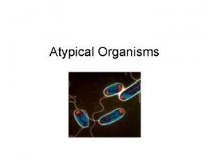Atypical Organisms Mycoplasmas Characteristics Lack cell walls Pleomorphic