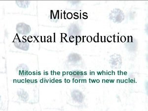 Mitosis Asexual Reproduction Mitosis is the process in