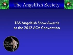TAS Angelfish Show Awards at the 2012 ACA