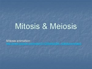 Mitosis Meiosis Mitosis animation http www youtube comwatch
