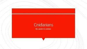 Cnidarians By Lauren Lorenzo Body Symmetry Radial Symmetry
