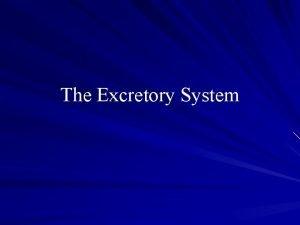The Excretory System Do Now Excretory System Excretion