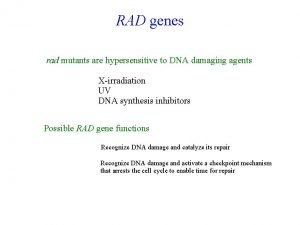 RAD genes rad mutants are hypersensitive to DNA