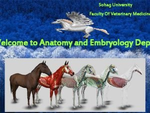 Sohag University Faculty Of Veterinary Medicine Welcome to
