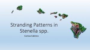 Stranding Patterns in Stenella spp Carissa Cabrera Objective