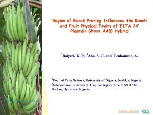 Region of Bunch Pruning Influences the Bunch and