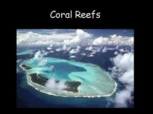 Coral Reefs Scleractinian corals Phyllum Cnidaria Class Anthozoa