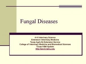 Fungal Diseases 4 H Veterinary Science Extension Veterinary