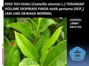 EFEK TEH HIJAU Camellia sinensis L TERHADAP VOLUME