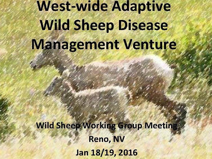 Westwide Adaptive Wild Sheep Disease Management Venture Wild
