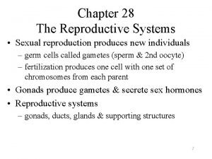 Chapter 28 The Reproductive Systems Sexual reproduction produces