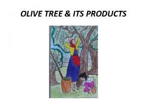OLIVE TREE ITS PRODUCTS The olive tree I