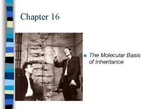 Chapter 16 n The Molecular Basis of Inheritance