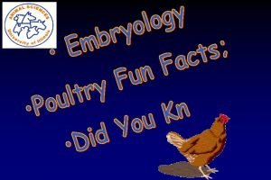 Ken Koelkebeck Extension Specialist Poultry University of Illinois