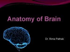 Anatomy of Brain Dr Rima Pathak Gross Anatomy