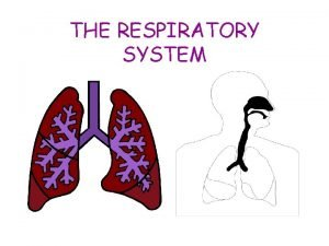THE RESPIRATORY SYSTEM Jobs of the Respiratory System