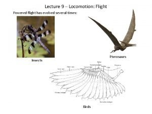 Lecture 9 Locomotion Flight Powered flight has evolved