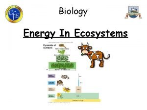 Biology Energy In Ecosystems 1 Roles of Organisms