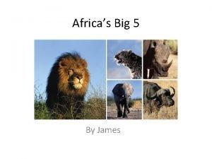 Africas Big 5 By James Lion Size shoulder
