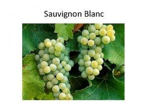 Sauvignon Blanc Sauvignon Blanc is a greenskinned grape