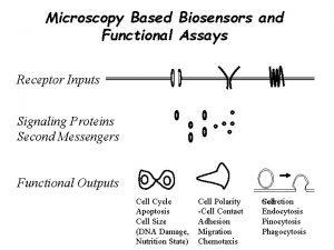 Microscopy Based Biosensors and Functional Assays Receptor Inputs