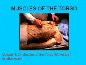 MUSCLES OF THE TORSO Upload 8 21 Muscles