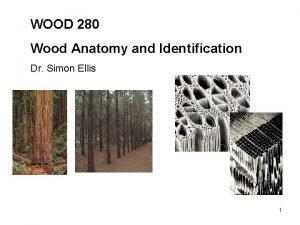 WOOD 280 Wood Anatomy and Identification Dr Simon